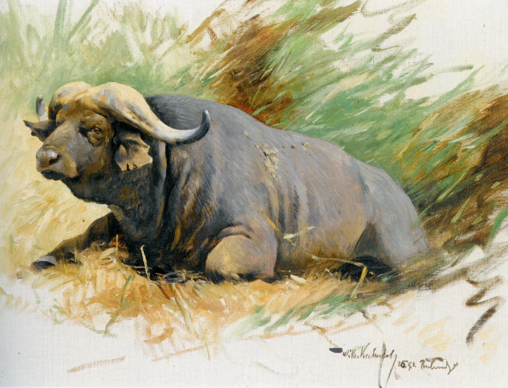 Scetch of an ox :: Wilhelm Kuhnert - Animals ôîòî