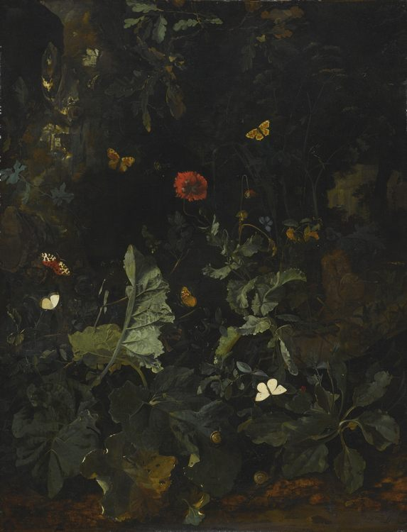 Alkmaar a forest floor still life with flowering plants and butterflies
