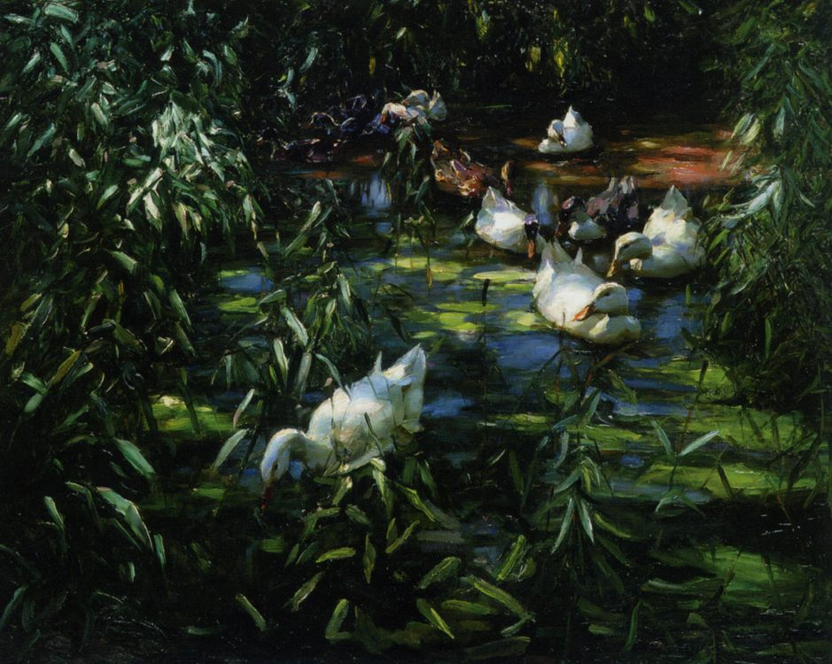 Ducks in the reed pond :: Alexander Koester - Animals фото