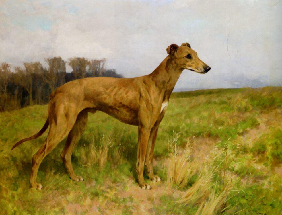 Champion Greyhound Dee Flint  :: Arthur Wardle - Hunting scenes фото