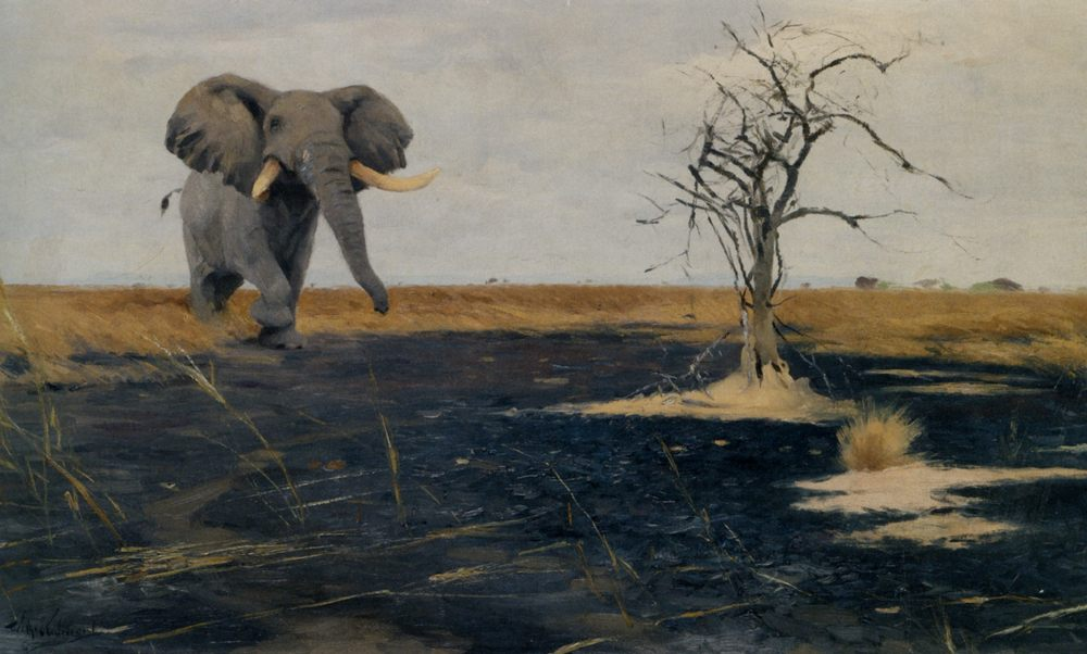 The Lone Elephant :: Wilhelm Kuhnert - Animals фото